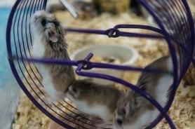 Hamster Traffic Jam