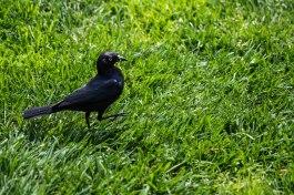 Walking Bird